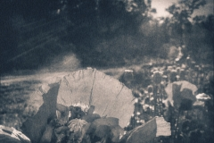cyanotype-pirjolempea-10