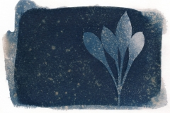 cyanotype-pirjolempea-4