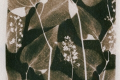 cyanotype-pirjolempea-7