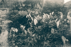 cyanotype-pirjolempea-9