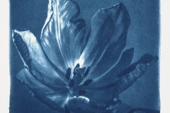 cyanotype-pirjolempea